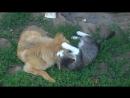 Без кота и жизнь не та - даже у собаки Для Дейзи кот - не соперник, а компаньон по играм! Здорово, когда есть такие друзья!