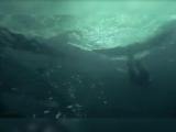 Фелпс против акулы