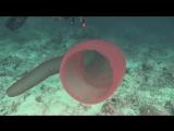 Самые странные и удивительные животные океана.