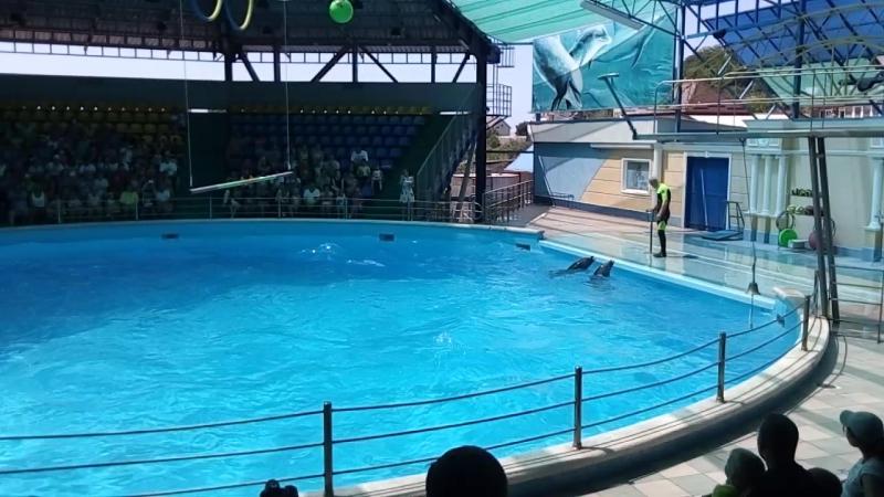 Дельфинарий п.Небуг.