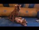 Игры котёнка с кошкой мамой!Котик продаётся!