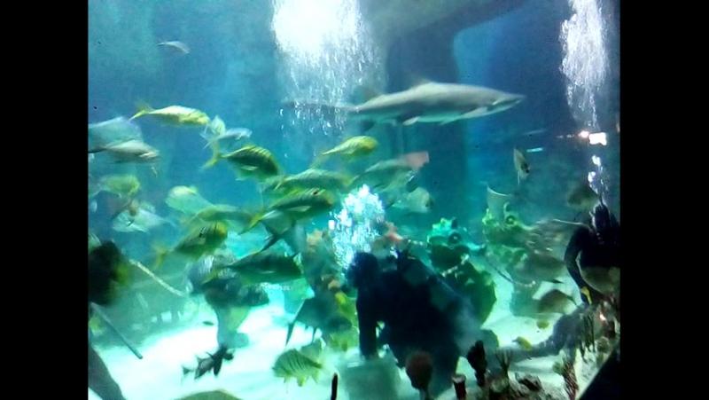 Кормление акул Маши и Мишы