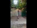 Ебанутая соседка😂👍