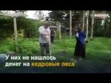 Житель Сахалина за свои деньги посадил 250 тысяч деревьев!