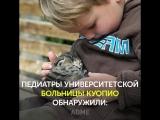 Наука рекомендует заведите кота