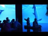 """Выставка """"Как и ты человек и дельфин"""""""