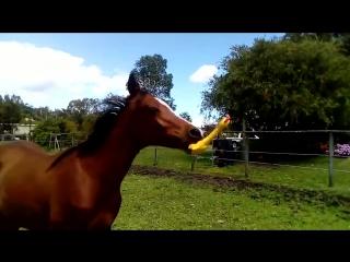 Лошадь и резиновая утка