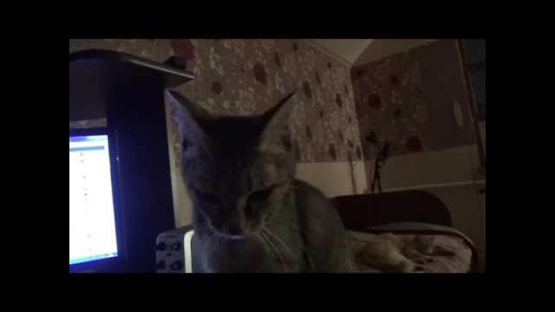 Тетя Чуня - Говорящая Кошка