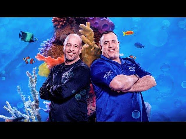 Аквариумный бизнес. Настоящие аквариумы Беверли Хиллз