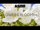 ASMR Nature Flowers Blooming