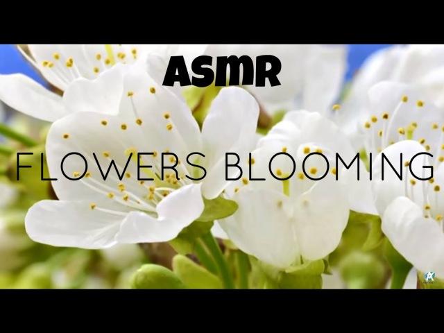 ASMR Nature - Flowers Blooming