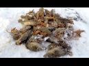 Зима Проверка Китайских Раколовок Готовимся к Зимней Ловле Раков