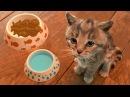 МОЙ МАЛЕНЬКИЙ КОТЕНОК - ПРИКЛЮЧЕНИЕ милого котика Мультики игра для детей Виртуальный питомец
