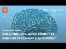 Мозг: работа синапсов — Вячеслав Дубынин vjpu: hf,jnf cbyfgcjd — dzxtckfd le,syby