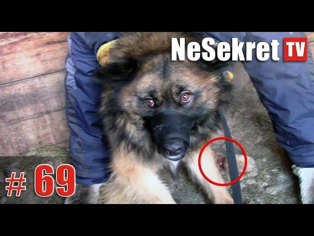 Собака запуталась в петле. Спасение 69. Город Улан-Удэ.