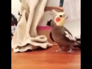 Попугай, который думает, что он дятел · coub, коуб