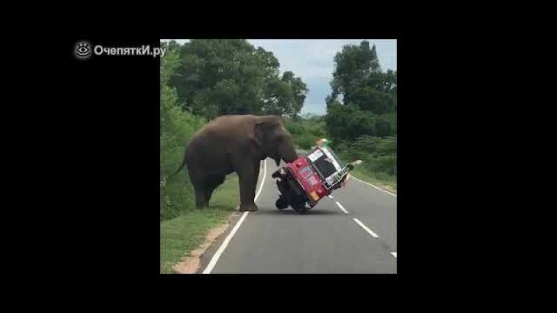 Когда неправильно кормишь слона