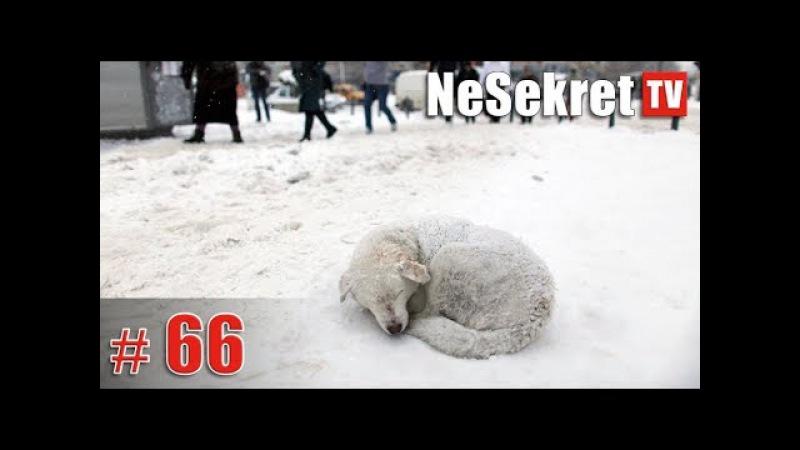 Собаку оставили на улице умирать. Спасение 66. Город Улан-Удэ.