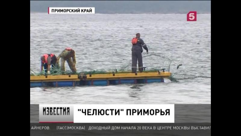 У берегов Приморского края замечены белые акулы. Новости 2017 Пример пропаганды как один из методов влияния СМИ против акул