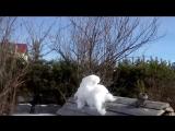 Новая невиданная птичка в кормушке))))