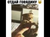 Отдай мою говядину!!!))))))))))))))))))