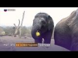 В Берлинском зоопарке поздравили с днем рождения слоненка