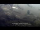 BBC Величайшие явления природы 2 Великий исход лосося Познавательный животные 2009
