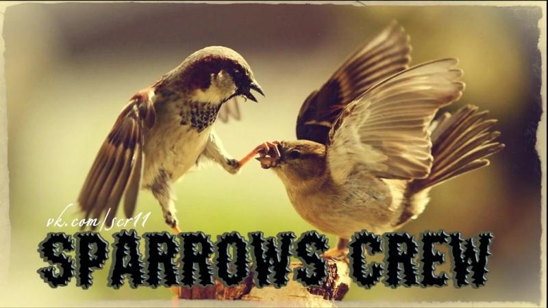 Sparrows Crew - газовый душ