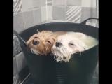 Собакены на расслабоне