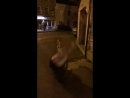 Girl Tries to Jump Over Pole - 987935