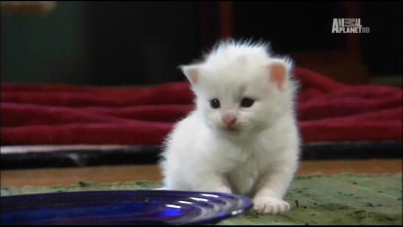 Котята и Щенки / Too Cute! (Серия №25)
