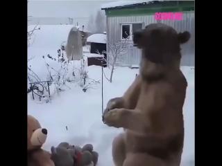 Медведь Степан и его плюшевые мишки