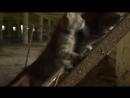 Животные мира Джунгли Чернобыля Немой призрак Зона отчуждения-Chernobyl--vo--spem--scscscrp