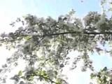 Қызды көргенде шаһуаты қозған жігіттің оқиғасы - Абдугаппар Сманов.mp4