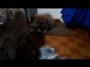 Мы с Жулей играем с газетой.