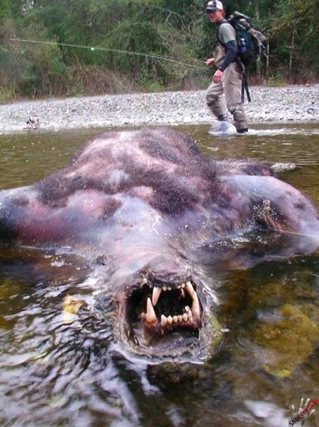 Ужас в реке
