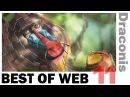 BEST Of WEB 11 [HD] | Best Vidéo Ever |
