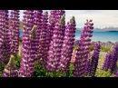 Новая Зеландия озеро Текапо