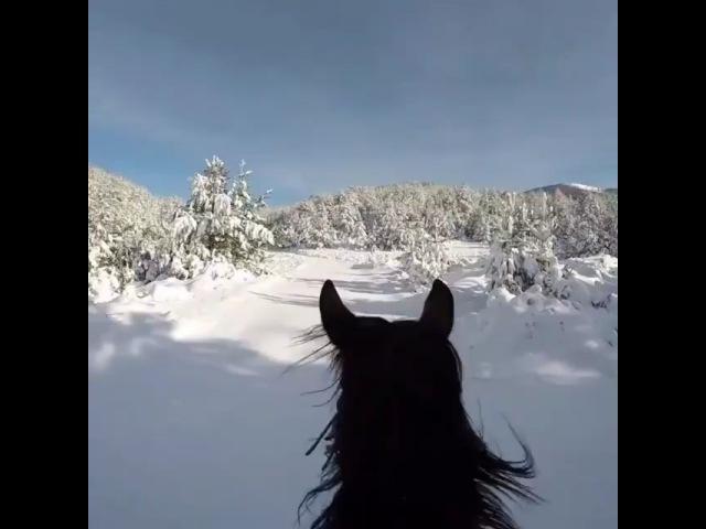 Instagram post by 🎀Original ™ horse_p0st🎀 • Jan 14, 2018 at 3:16pm UTC