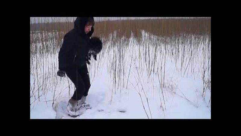 Зимний видео - обзор сортов Американки гигантской и Корзиночной на плантации