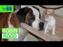 ПРИКОЛЫ 2017 с животными. Смешные Коты, Собаки, Попугаи Funny Dogs Cats Compilation. Апрель №88