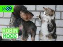 ПРИКОЛЫ 2017 с животными. Смешные Коты, Собаки, Попугаи Funny Dogs Cats Compilation. Апрель №89