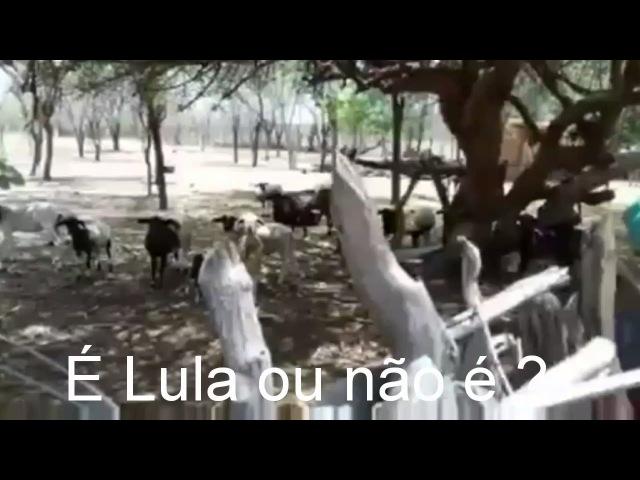 É Lula em 2018 ou não é ? (as cabras respondem )