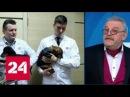 Эксперимент с таксой: Рогозин забрал собаку себе - Россия 24