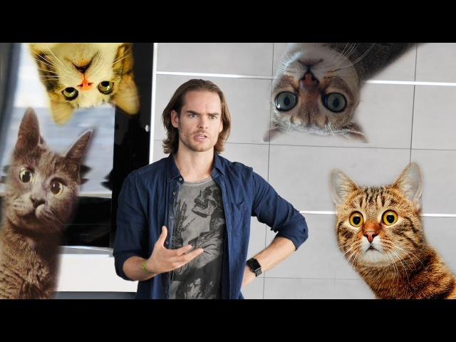 Роман Милованов про кормление кошек.