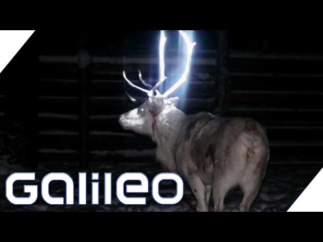 Bildgeschichte - Glühende Rentiere: Weihnachten Spezial | Galileo | ProSieben