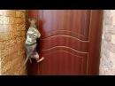 лысый кот сфинкс открывает дверь