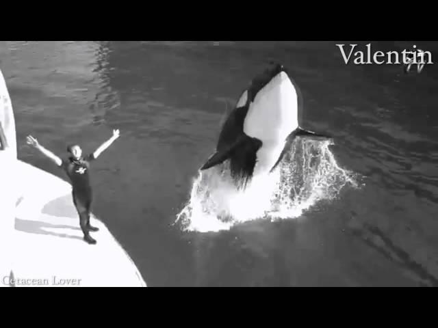 Already Gone - Deceased Orca Mep