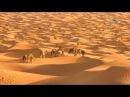 В дебрях Африки Сахара жизнь на грани