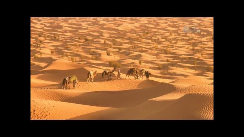 В дебрях Африки. Сахара жизнь на грани